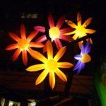 Leuchtende Blumen in Bielefeld