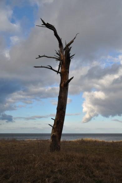 Abgestorbener Baum vor zerfetzten Wolken