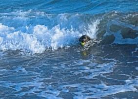 Seehund trotzt den Wellen