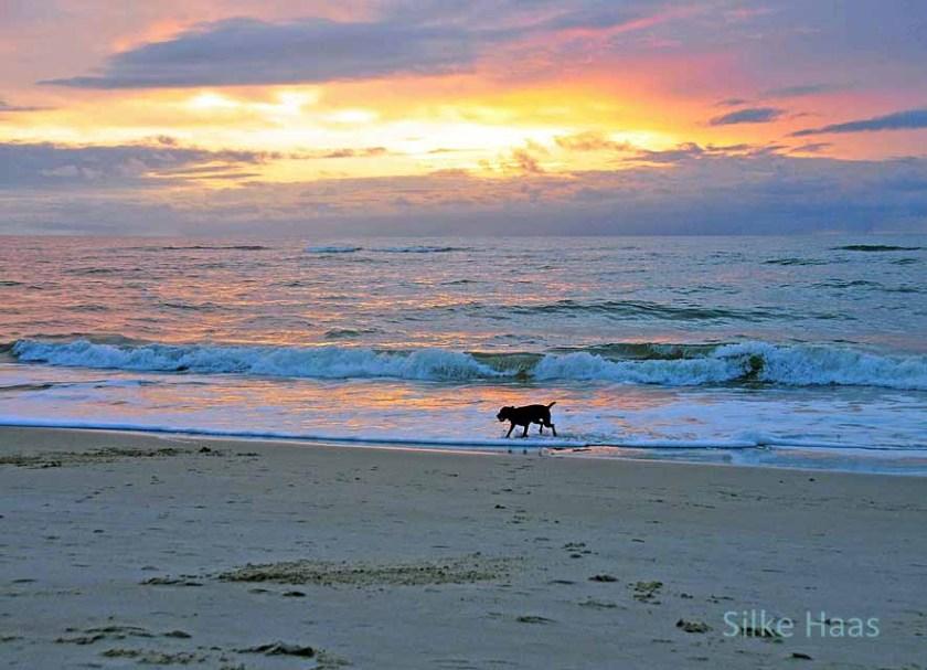 Hund am Strand von Sylt bei Sonnenuntergang