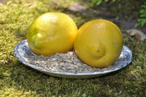 Olivenblätter und Zitronen