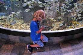 Frederik das Reisekind findet das Aquarium toll