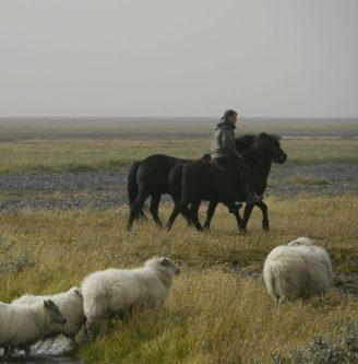 Rettir - Schafabtrieb zu Pferd