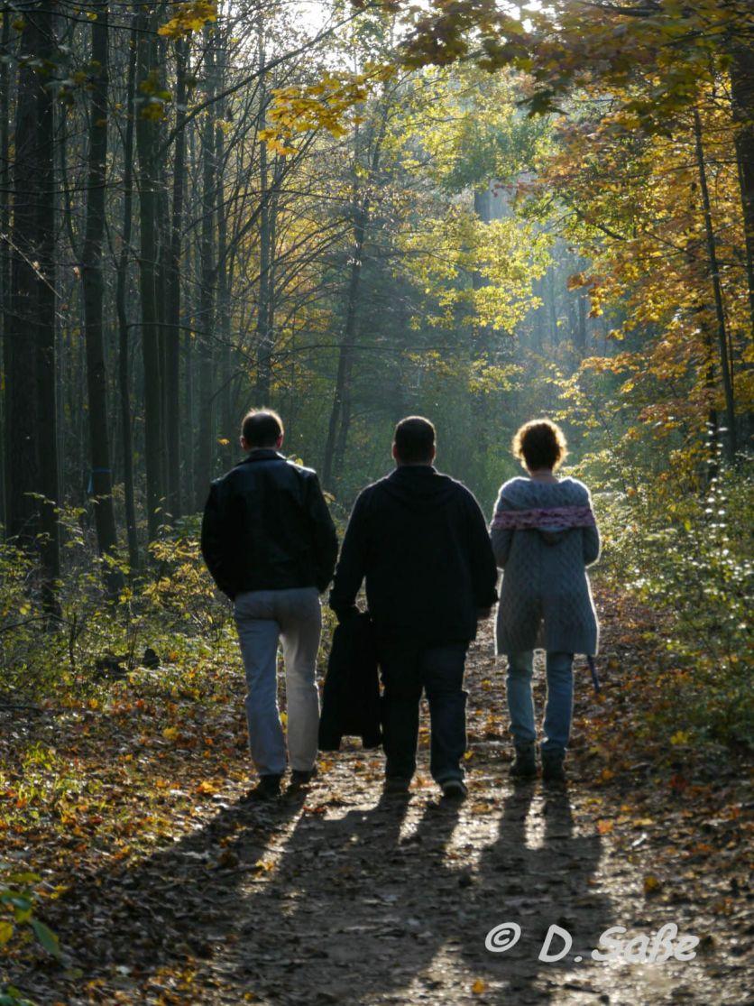Spaziergang, wenn die Sonne durch die Blätter blinzelt