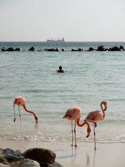 Aruba-ABC-Inseln-ABC-A-26-FlamingoInsel_1k4