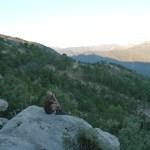 Der Ruf des Waldes: Auf Hirsch-Safari in Andalusien