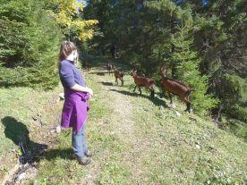 Alpbachtal Reisefeder Berge Alpen Benstem vier Ziegen