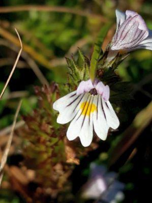 Benstem Reisefeder Alpbachtal Blume