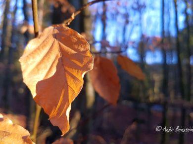 5 Harz Schnarcherklippen Benstem Reisefeder Natur wandern