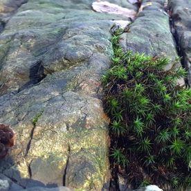 8 Harz Schnarcherklippen Benstem Reisefeder Natur wandern