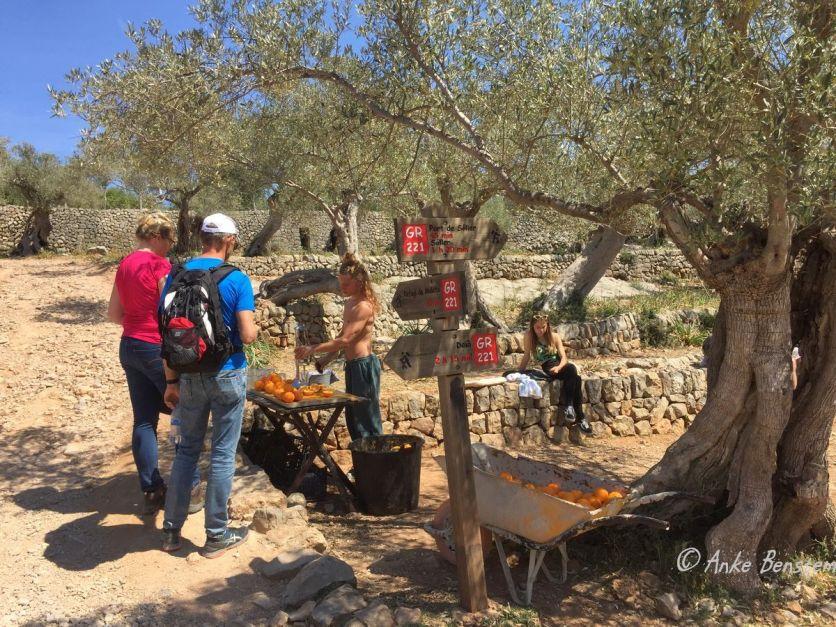 8 Reisefeder Zitronen Benstem Mallorca Soller Wandern