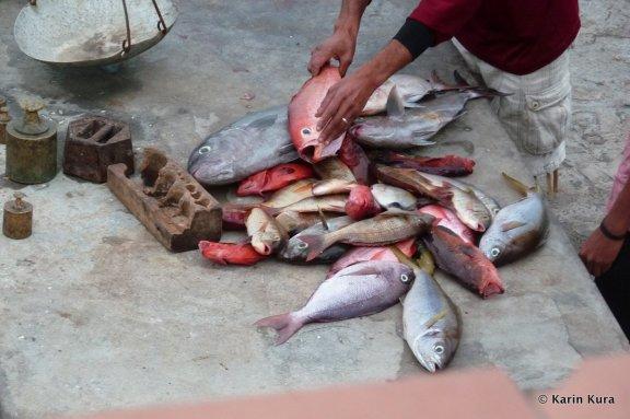 Fische aus dem Atlantik. Karin Kura