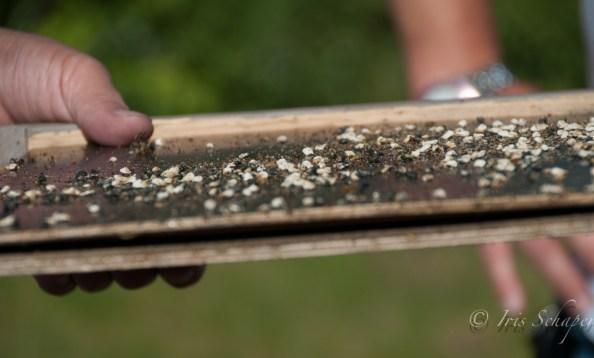 Gemüll eines Bienenvolks