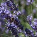Freilichtmuseum Mueß: Auf Bienentour und in die Vergangenheit