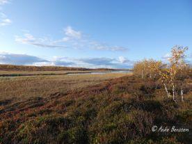 Reisefeder Finnmark Benstem Norwegen Natur Tundra 12