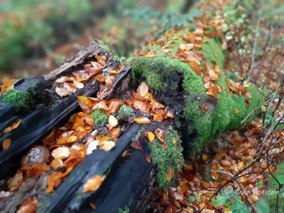 Benstem Reisefeder Hunsrück Laub Herbst Moos Holz
