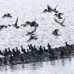 Drei Tage Nordsee III – Groden, Museum und Zugvögel am Meer