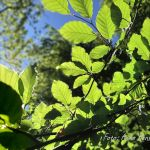 11 Tipps zum Frühlingsanfang: Endlich raus ins Grüne