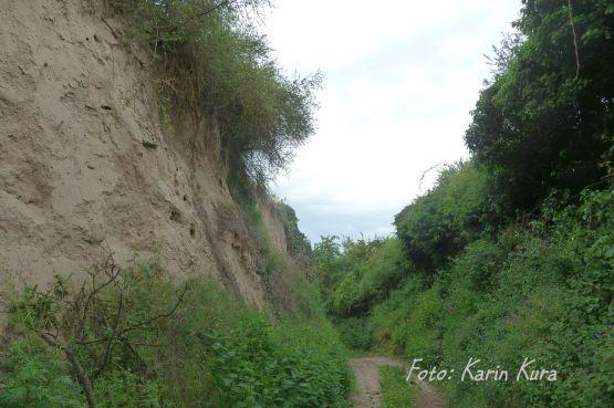 Reisefeder_KarinKura_Rheinterrassenweg_10