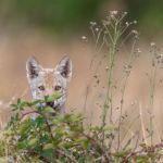 Neuerscheinung: Wolfsbegegnungen (+ Verlosung)