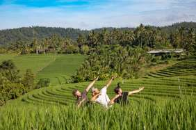 bali in ricefields