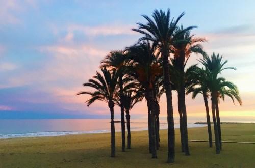 Palmer på stranda utenfor Villajoyosa Costa Blanca