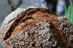 Berlin Reisekraniche Herbst Canon 100d Brot