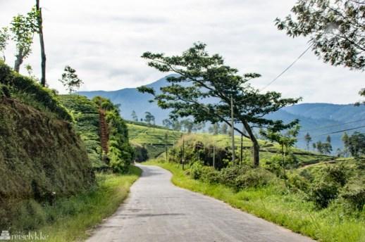 Å-reise-på-Sri-Lanka_