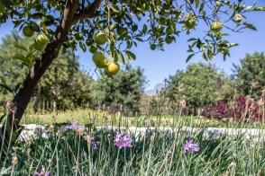 Hagen ved Babylonstoren Franschhoek