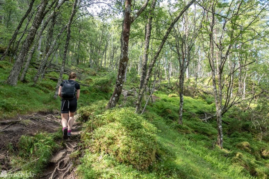 Skogstur opp langs Langfoss
