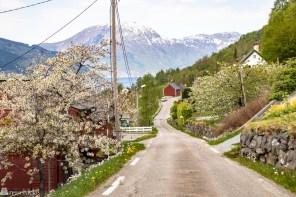 Selvfølgelig skal vi på Norgesferie i år!