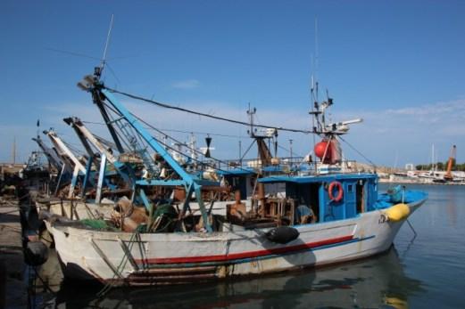 Fiskebåter i Trani