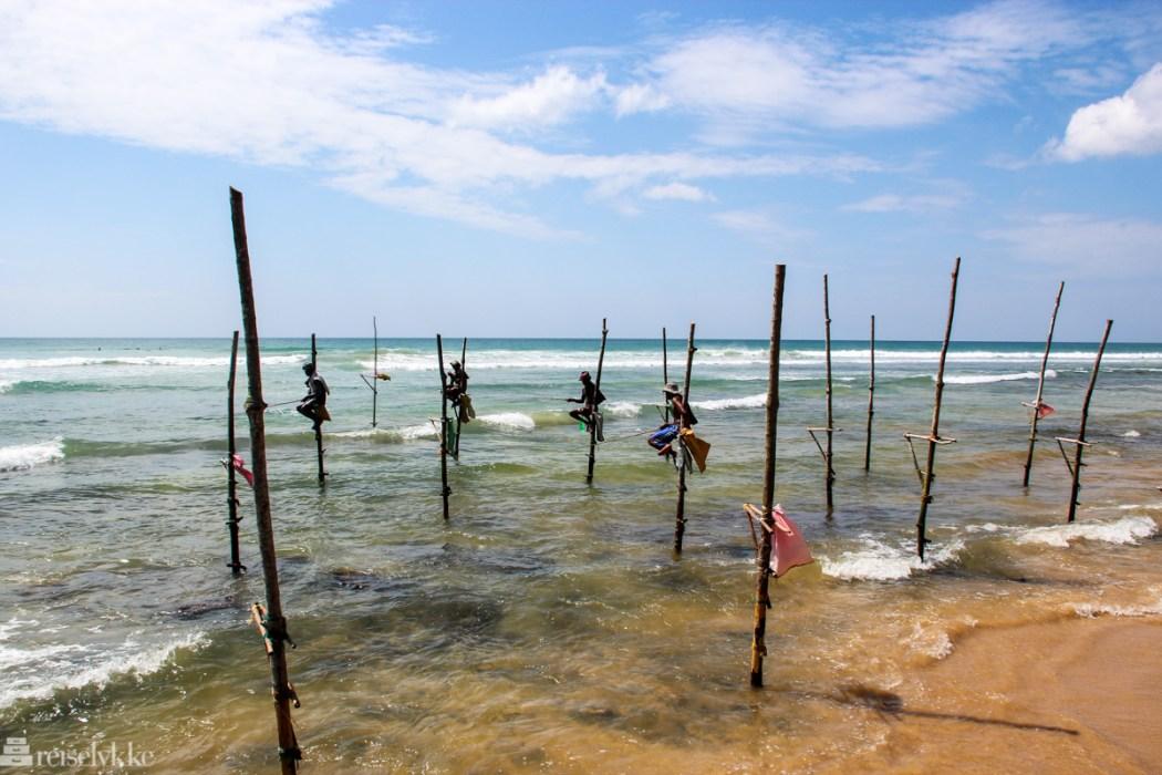 Guide til to ukers rundreise på Sri Lanka