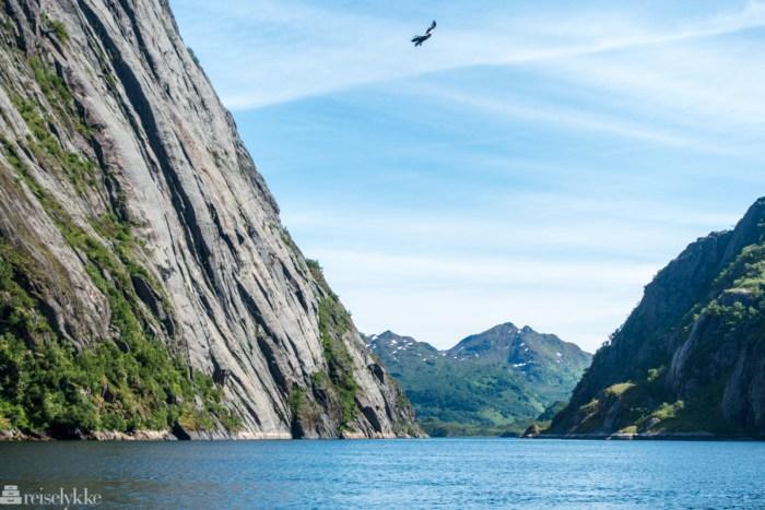 Havørnsafari i Trollfjorden