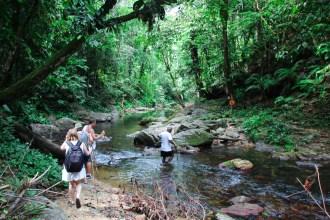 regskogen på trinidad