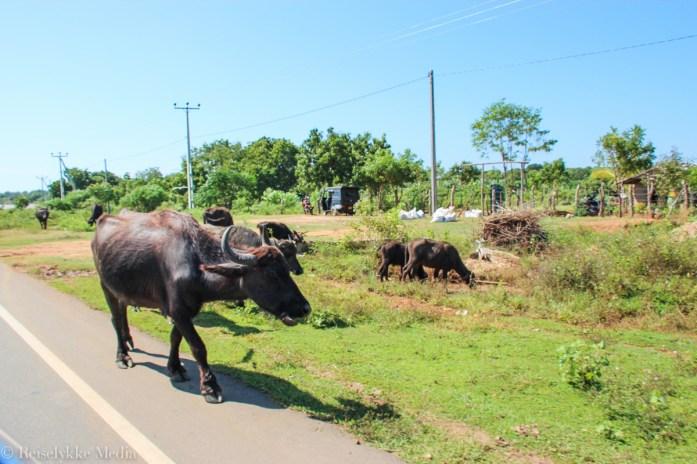 reise på Sri Lanka