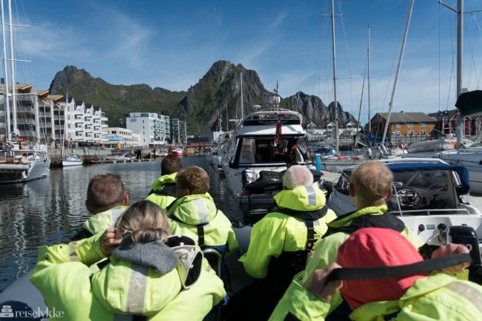 Rib-safari med Lofoten-Explorer