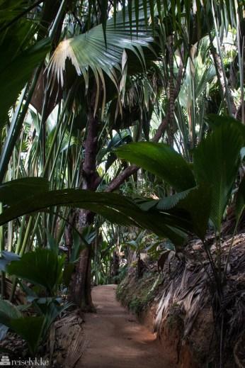 Sti i nasjonalparken Vallée de Mai på Praslin Seychellene