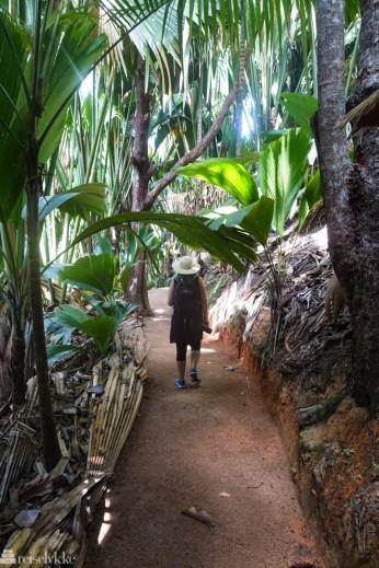 Vandretur i skogen Vallée de Mai, Praslin