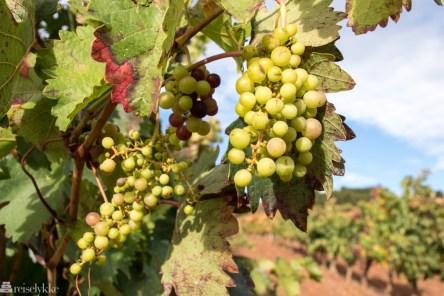 Vindruer i La Rioja
