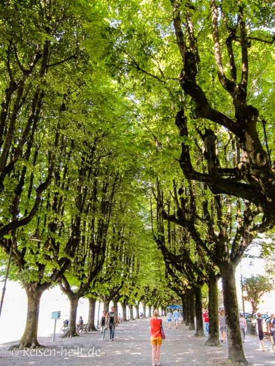 Angera im Sommer mit grüner Promenade - welch' Wohltat fürs Auge!