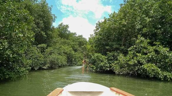 Die Backwaters in Puerto el Morro. Im Wasser: Brackwasserdelfine. In den Mangrovenwäldern: rosarote Reiher.