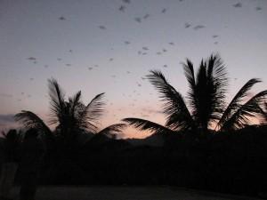 Viele Fledermaeuse