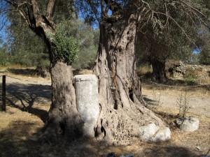 Baum vs. Säule