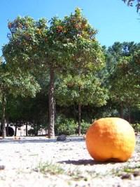 Orange im Park