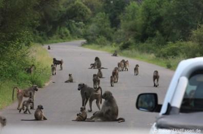 Horde Affen blockiert die Strasse