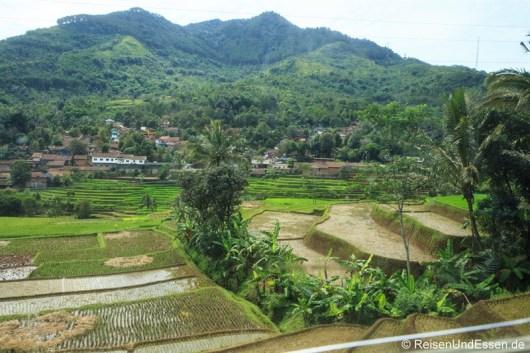 Blick auf Reisterrassen aus dem Argo Wilis