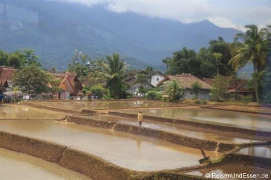 Reisterrassen während der Fahrt