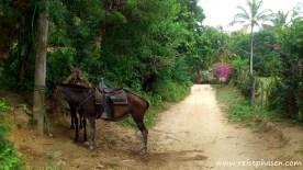 Wer zu faul zum Laufen ist, kann sich ein Pferd nehmen.