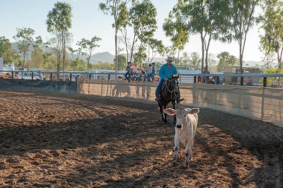 Eureka Creek Rodeo: Wie geschnell kann der Stockman das Kalb einfangen?
